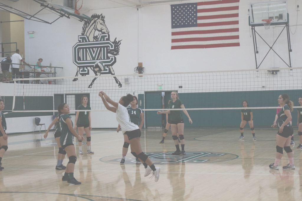 Mesa Juniors Volleyball Impresionante Saddleback - Team Home Saddleback Roadrunners Sports