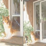 Patio Panel Pet Door Lujo Petsafe Deluxe Patio Panel Pet Doorspet Eze At Petworldshop
